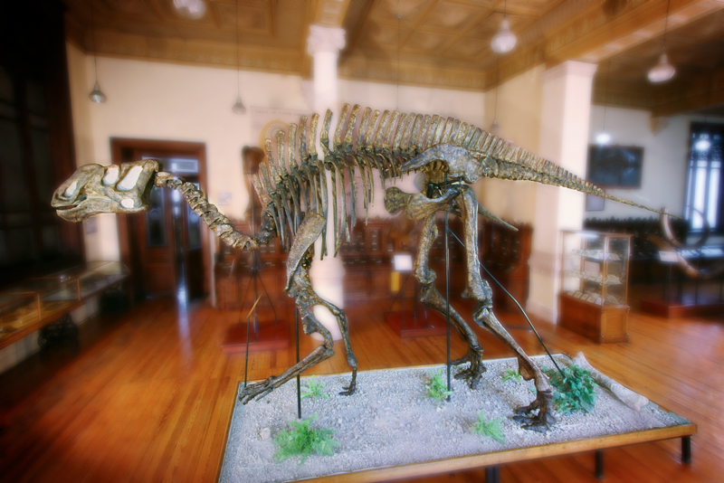 The footprints that led Luis Espinosa to discover the first Mexican dinosaur